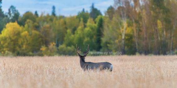 Westway-Studio-Jackson-Yellowstone-Bozeman-005
