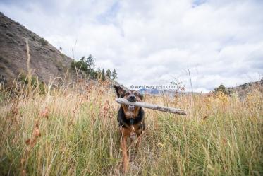 Westway-Studio-Jackson-Yellowstone-Bozeman-045