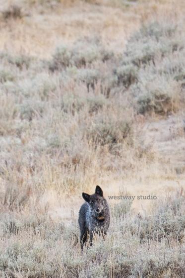Westway-Studio-Jackson-Yellowstone-Bozeman-060