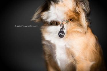 Rancho-Bernardo-Pet-Photography-02