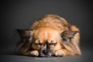 Rancho-Bernardo-Pet-Photography-05