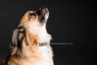 Rancho-Bernardo-Pet-Photography-10