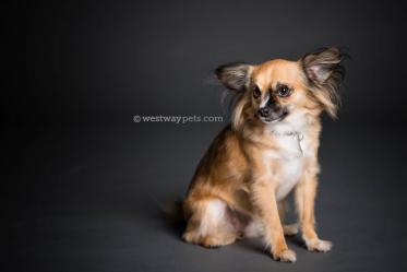 Rancho-Bernardo-Pet-Photography-11