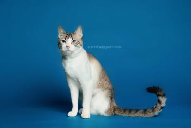 WestwayStudio-Cat-Portrait-Studio-Kingman25
