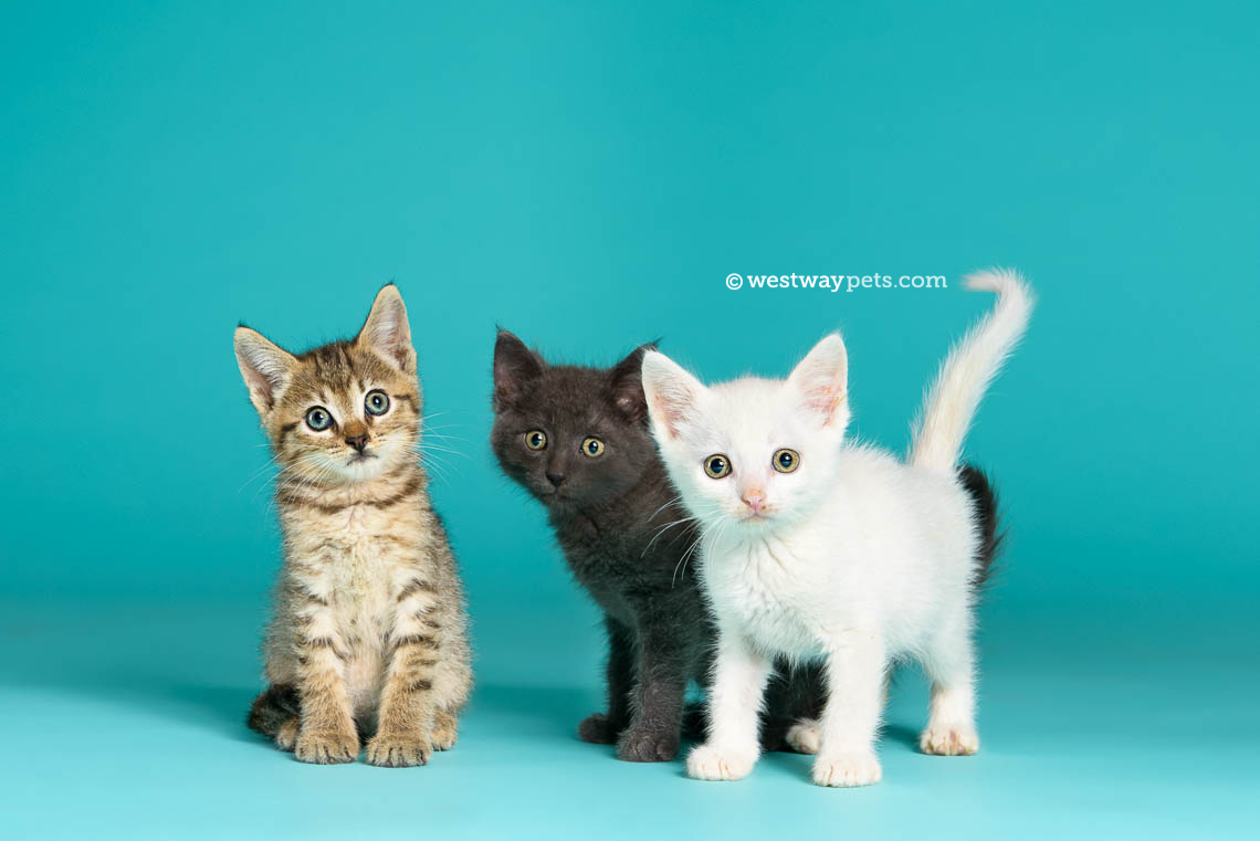 mercial Pet grapher San Diego Pets Magazine
