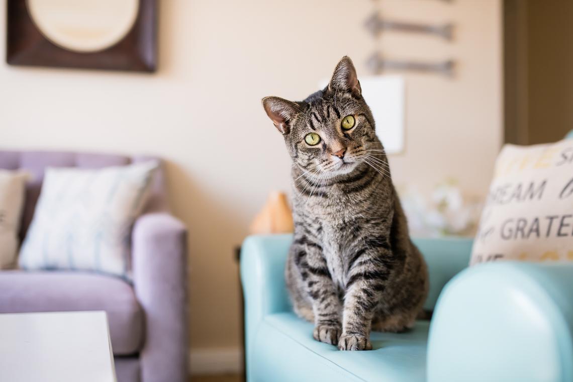 cat-supplement-family-emmert-commercial-cat-photographer-westway-studio-22