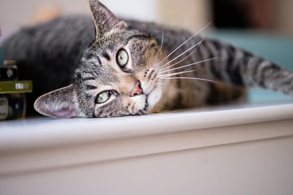 cat-supplement-family-emmert-commercial-cat-photographer-westway-studio-23