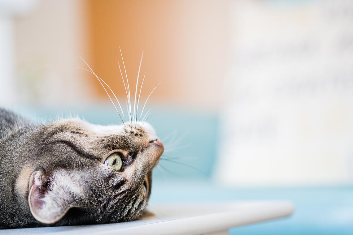 cat-supplement-family-emmert-commercial-cat-photographer-westway-studio-24