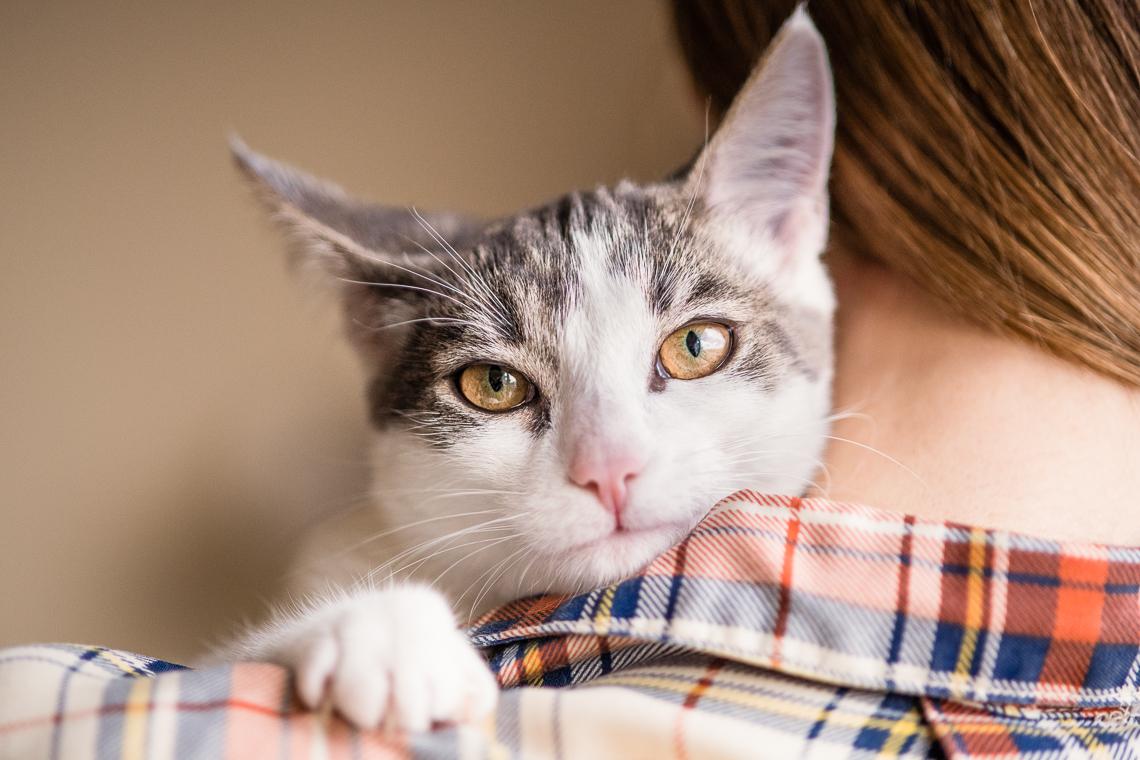 cat-supplement-family-emmert-commercial-cat-photographer-westway-studio-25