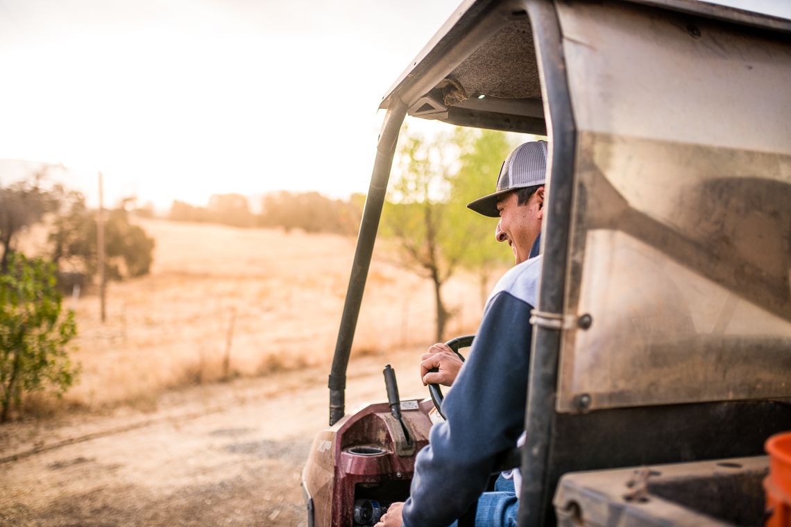 farmer-emmert-commercial-livestock-photographer-westway-studio-10