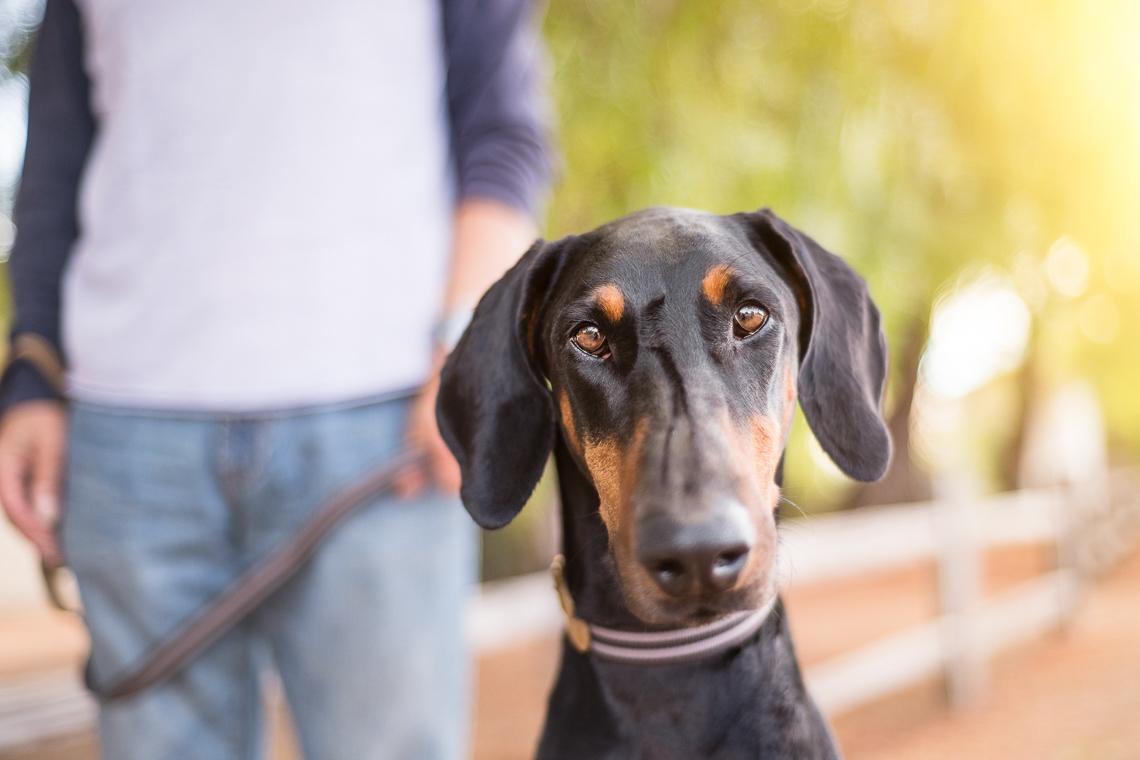 dog-supplement-food-emmert-commercial-dog-photographer-westway-studio-28