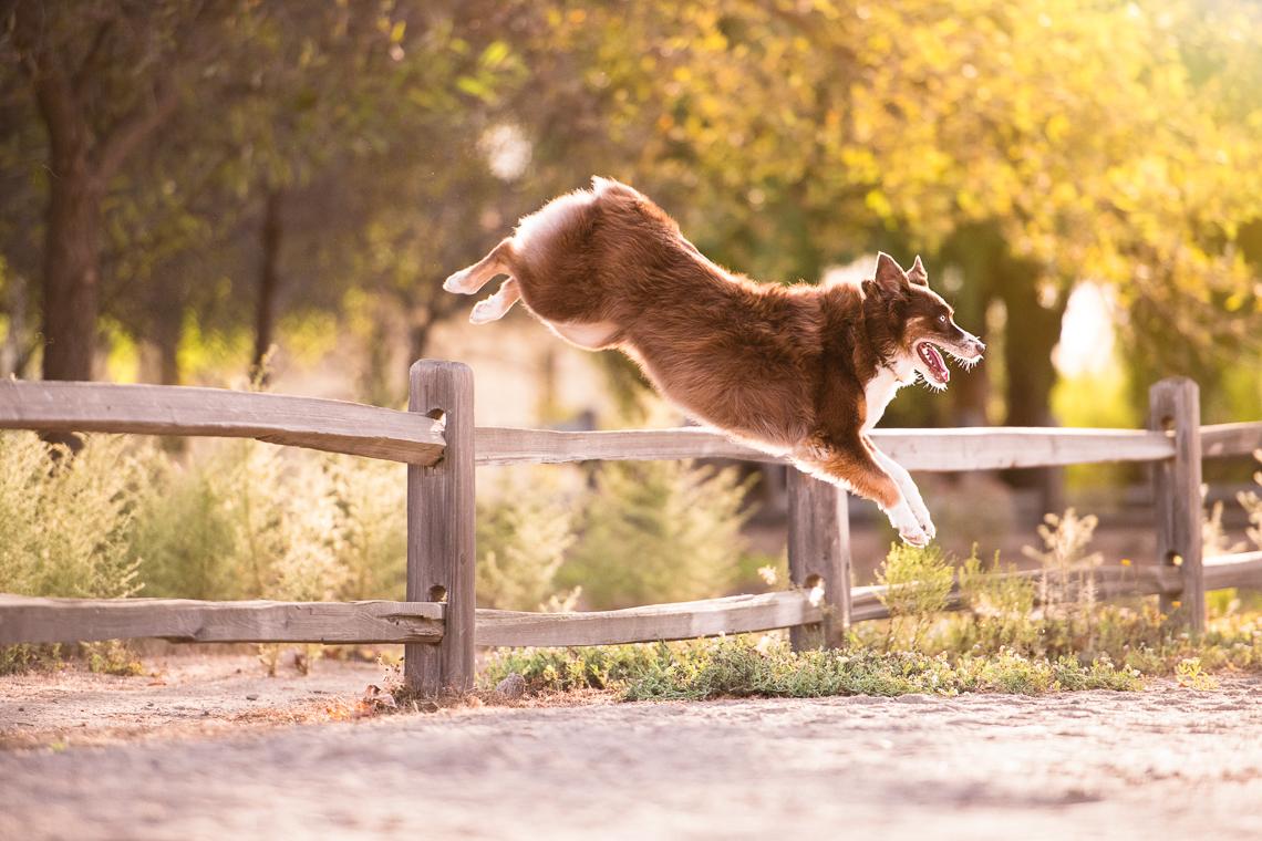 dog-supplement-food-emmert-commercial-dog-photographer-westway-studio-31