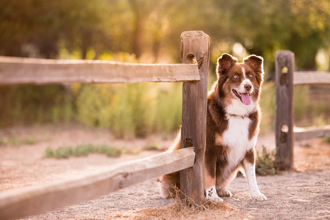 dog-supplement-food-emmert-commercial-dog-photographer-westway-studio-32