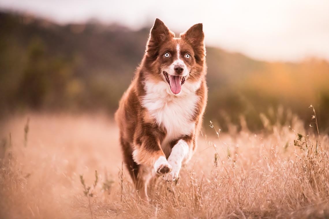 dog-supplement-food-emmert-commercial-dog-photographer-westway-studio-36