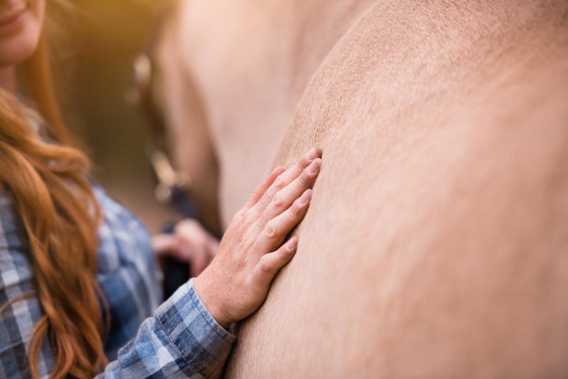 horse-supplement-showbloom-emmert-commercial-horse-livestock-photographer-westway-studio-38