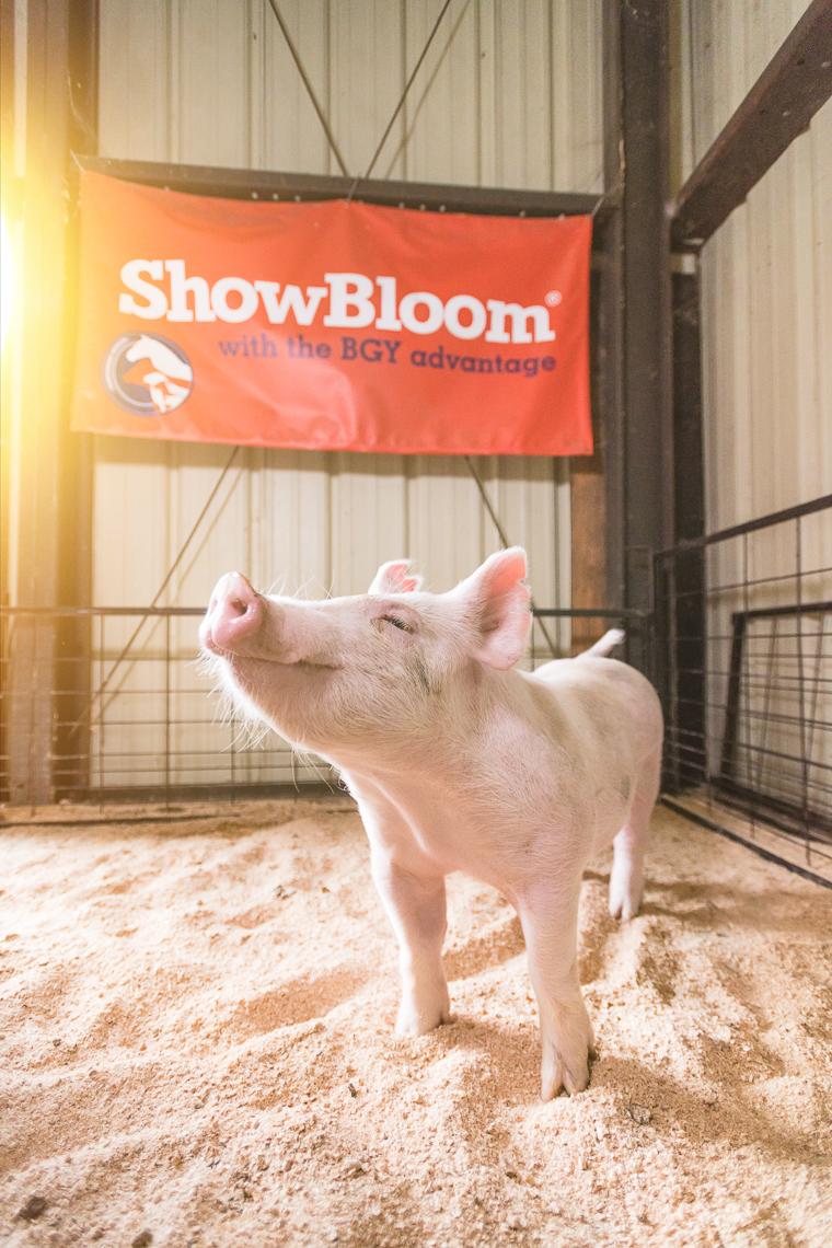 pig-swine-supplement-show-emmert-commercial-livestock-photographer-westway-studio-21