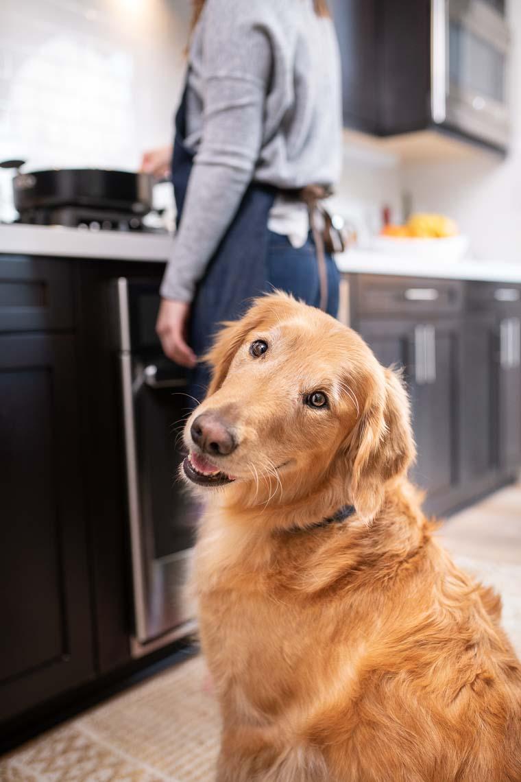 Westway-Studio-commercial-brand-lifestyle-dog-pet-photography-photographer-san-diego-orange-county-california-11