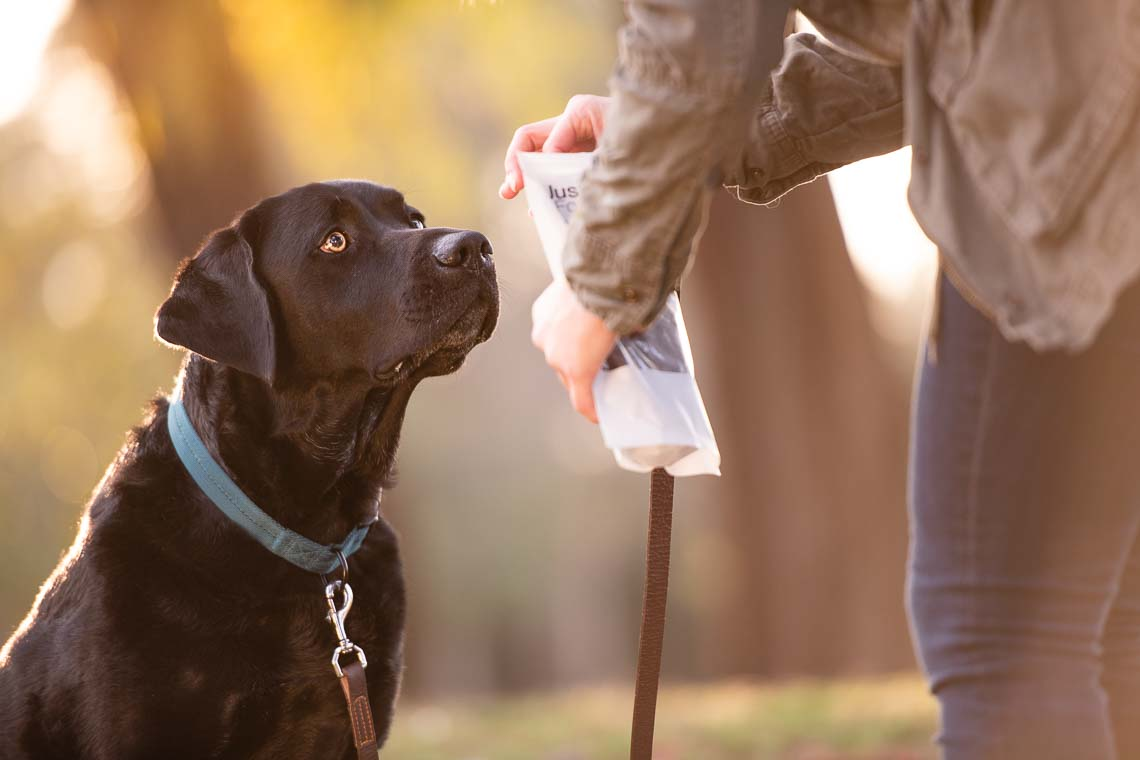Westway-Studio-commercial-brand-lifestyle-dog-pet-photography-photographer-san-diego-orange-county-california-14