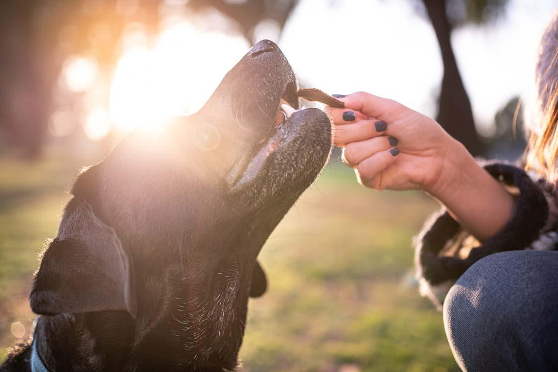 Westway-Studio-commercial-brand-lifestyle-dog-pet-photography-photographer-san-diego-orange-county-california-15