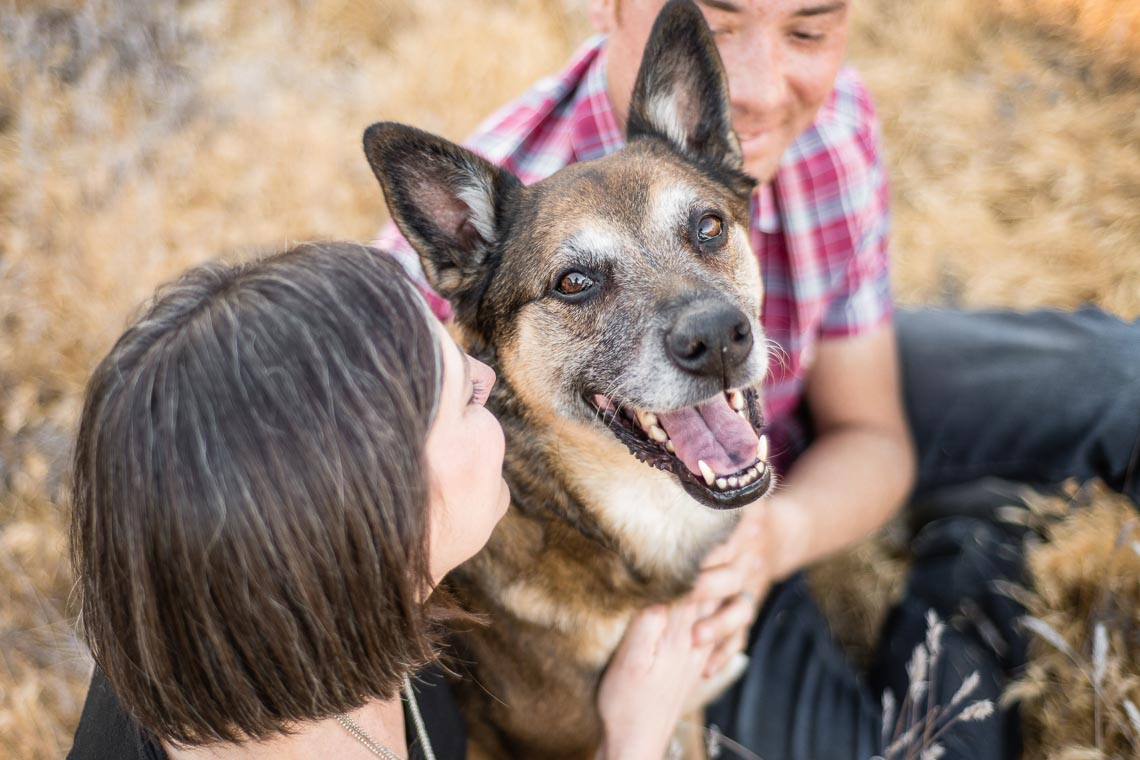 Westway-Studio-senior-german-shepherd-mix-19