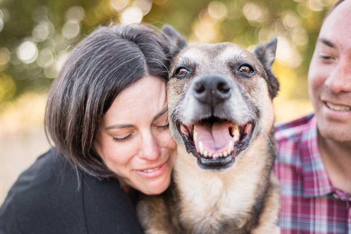 Westway-Studio-senior-german-shepherd-mix-21