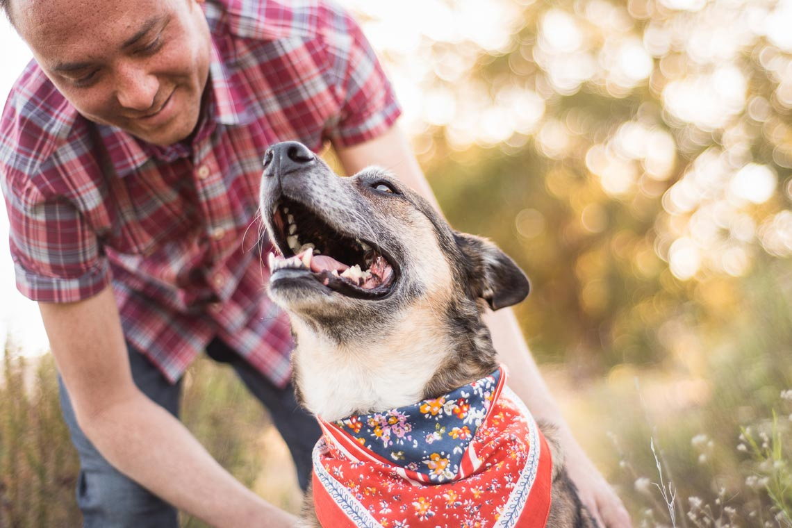 Westway-Studio-senior-german-shepherd-mix-24