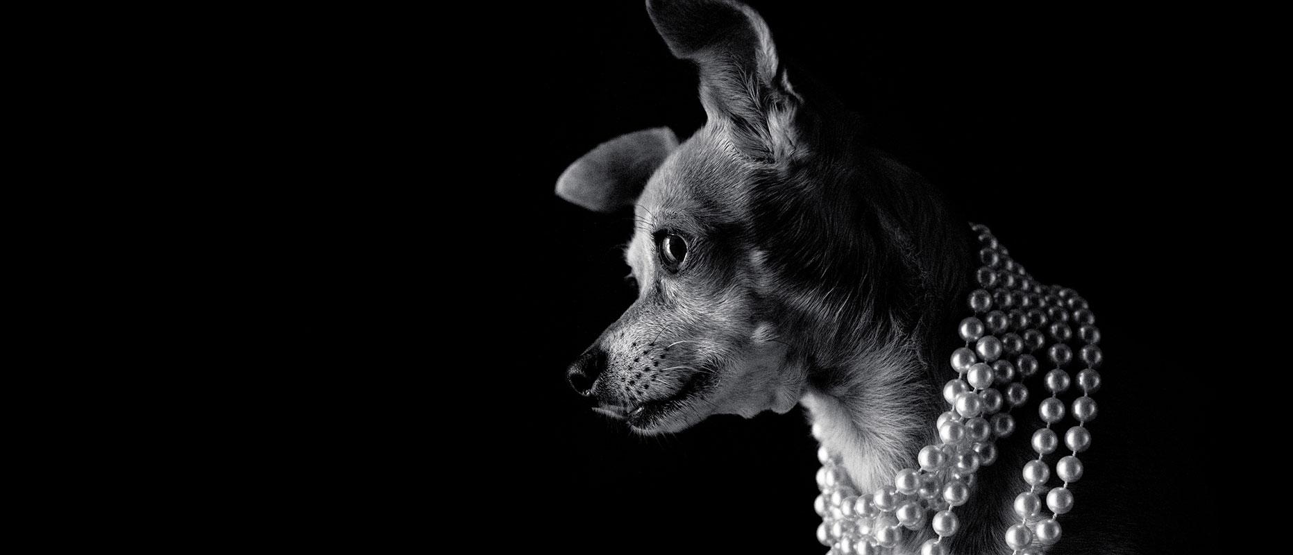 San-Diego-Pet-Photographer-Westway-Studio-14