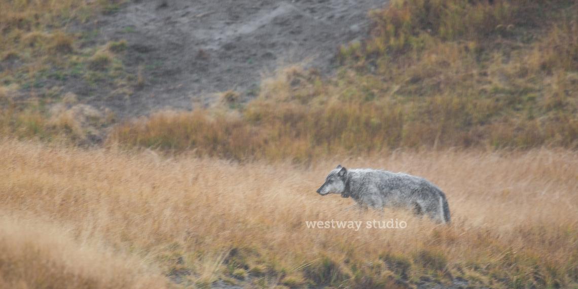 Westway-Studio-Jackson-Yellowstone-Bozeman-023