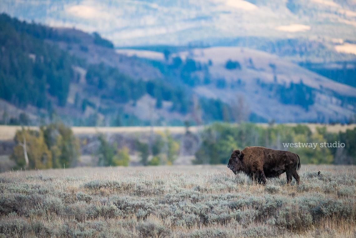 Westway-Studio-Jackson-Yellowstone-Bozeman-056