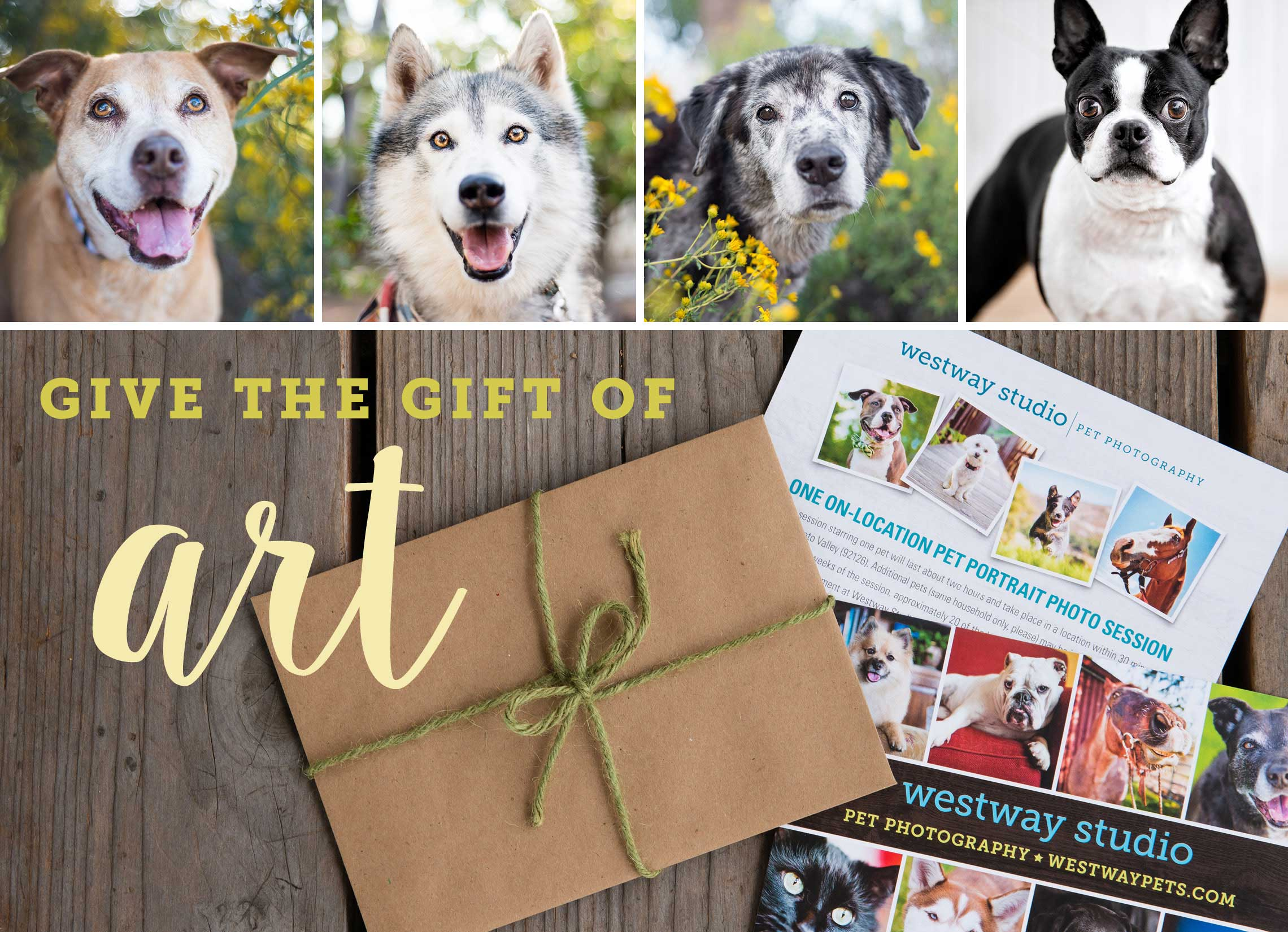holiday gift certificates san diego pet photography 2016 holiday gift certificates