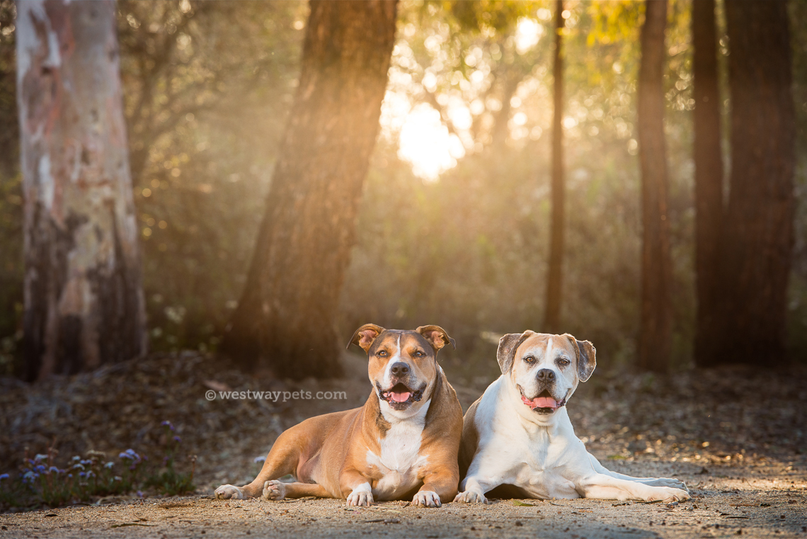 Westway Studio - boxers - backlit - trees - forest - sunset