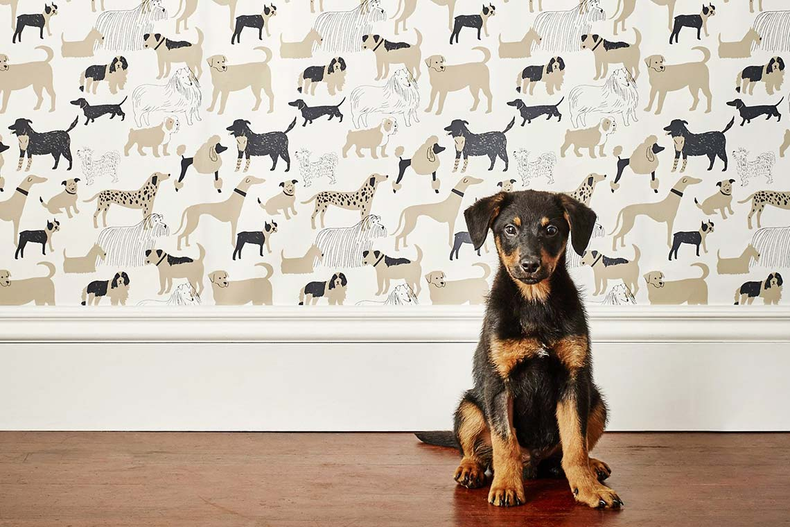 Decorating with dog 10 tactful home design ideas that wow 1 dog park wallpaper from hygge west solutioingenieria Choice Image