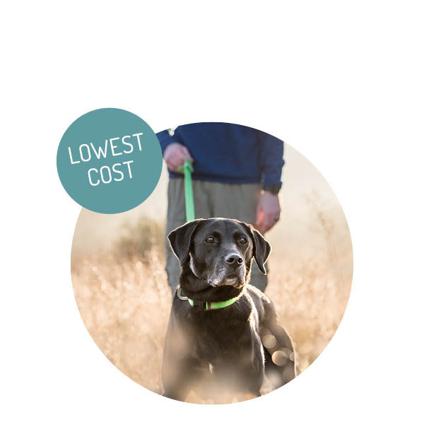 Pet Photography Rates // Commercial | Westway Studio | San Diego's